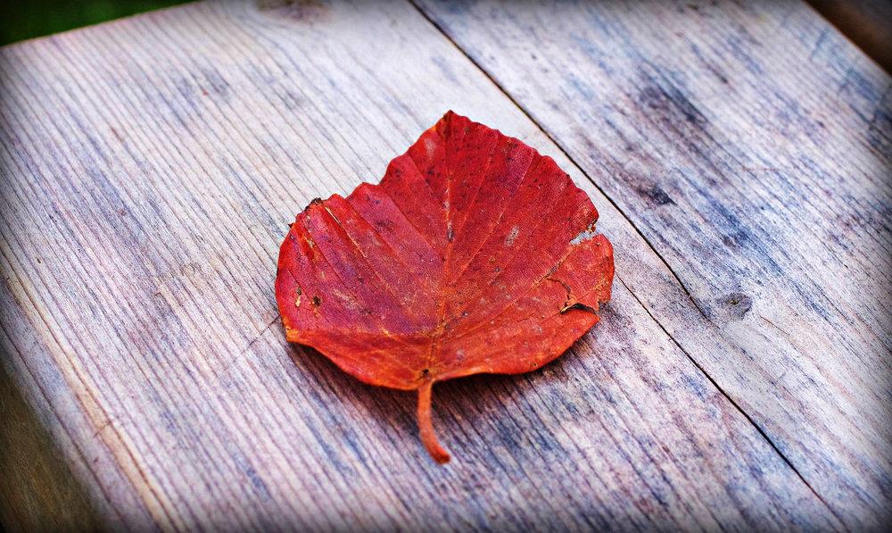Leaf on wood.
