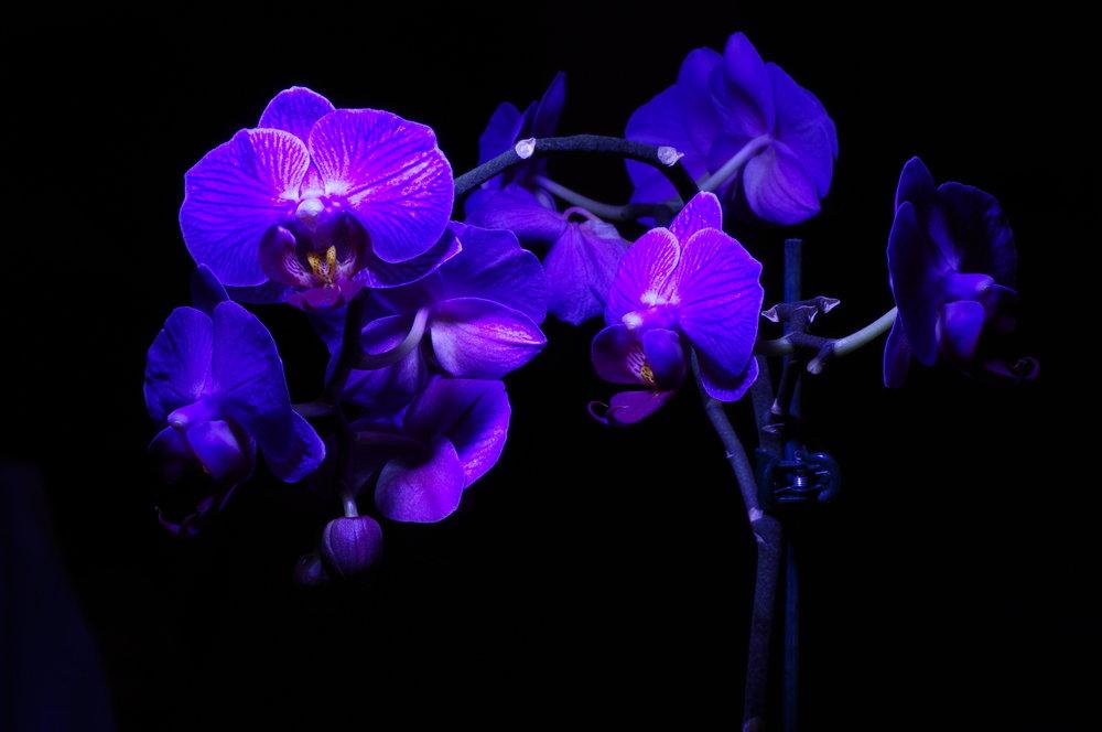 Orchids in the dark