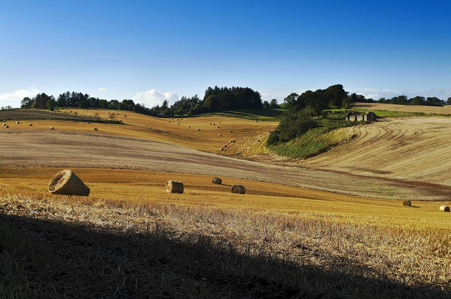 Auchtertool Fields