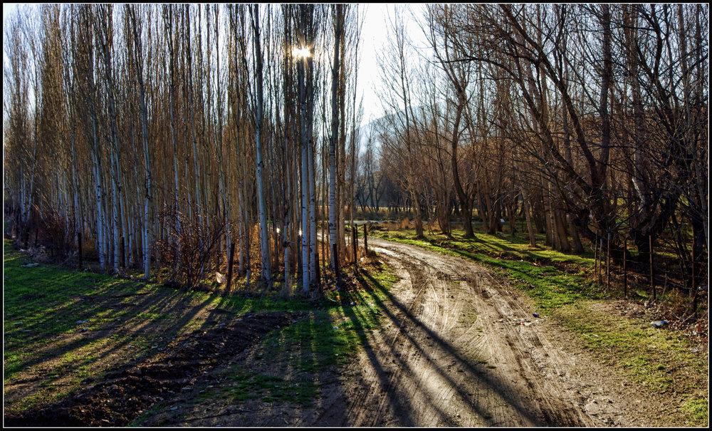Trees II a