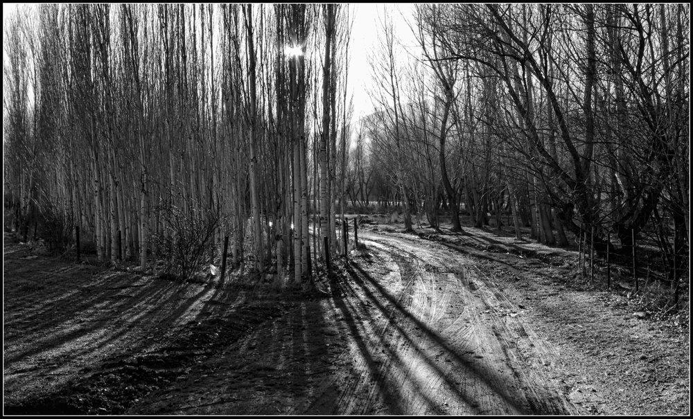 Trees II b