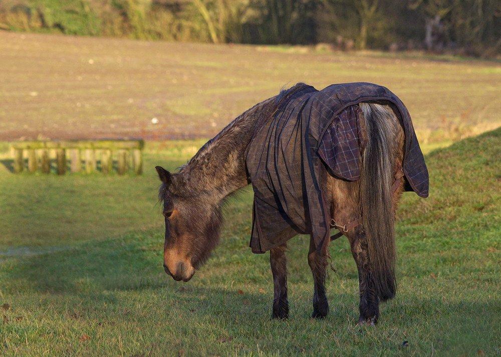 Cloths Horse