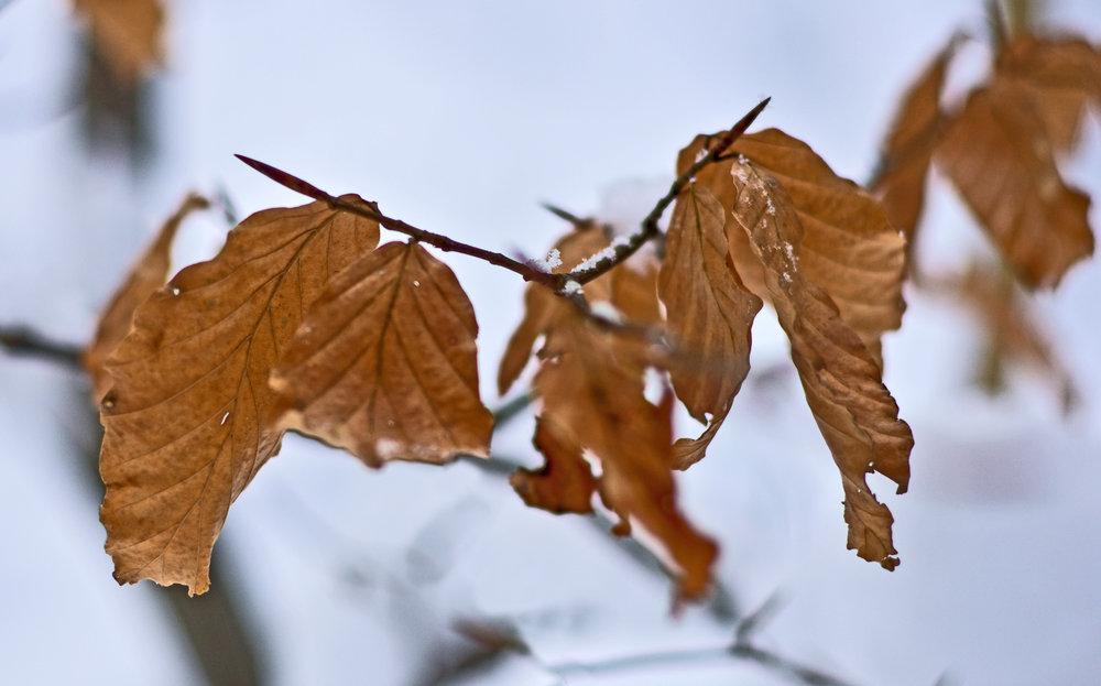 Colour in Winter