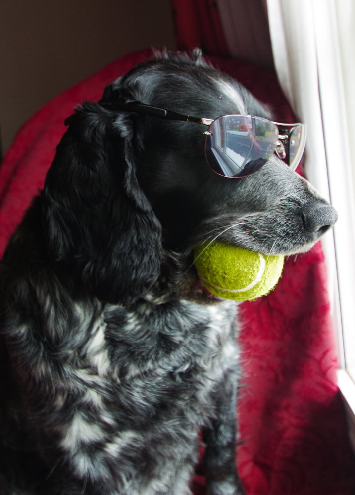 Cool Dog, 2013 Here l come !