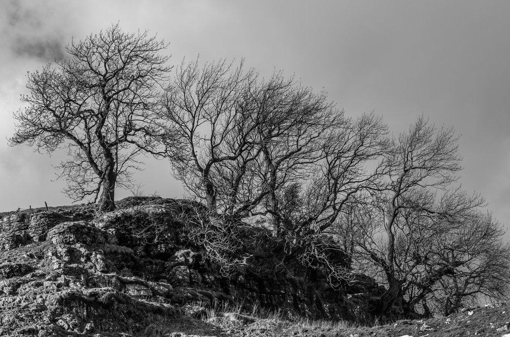 Moody Trees !
