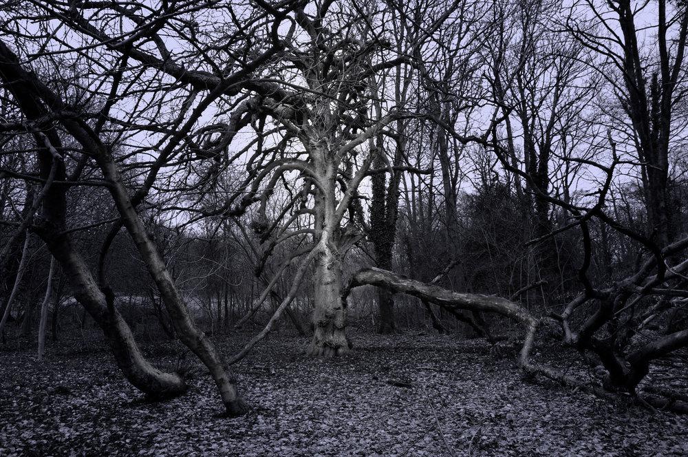 An Ancient Tree, Broken