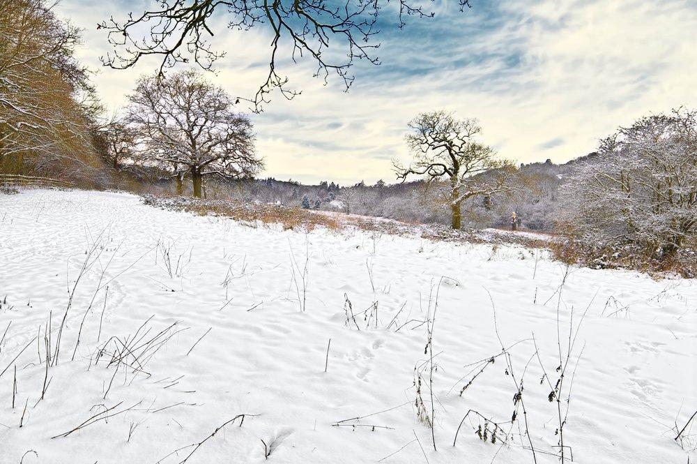 Banstead Forest, snowy scene 1