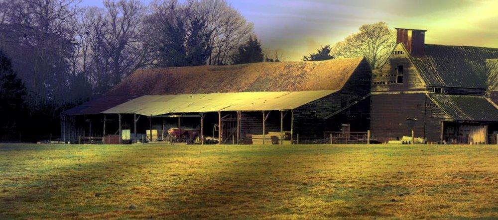 Golden dawn at Wareside farm