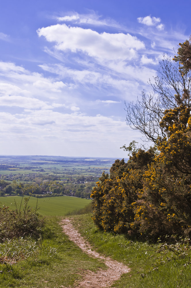 Spring on Coombe Hill (Aylesbury 2012)