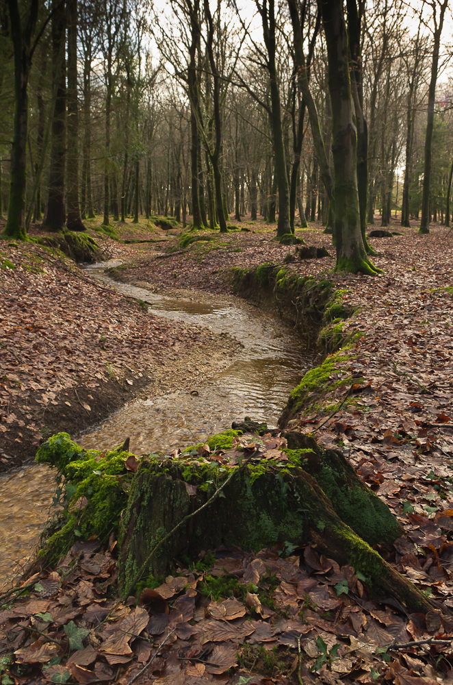 Winter Stream in  New Forest