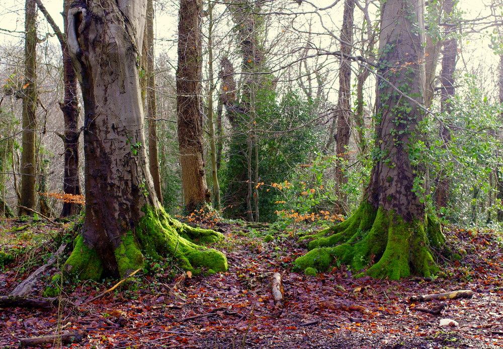 Tree feet