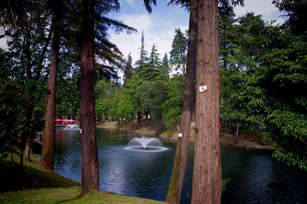 Pentax Forest
