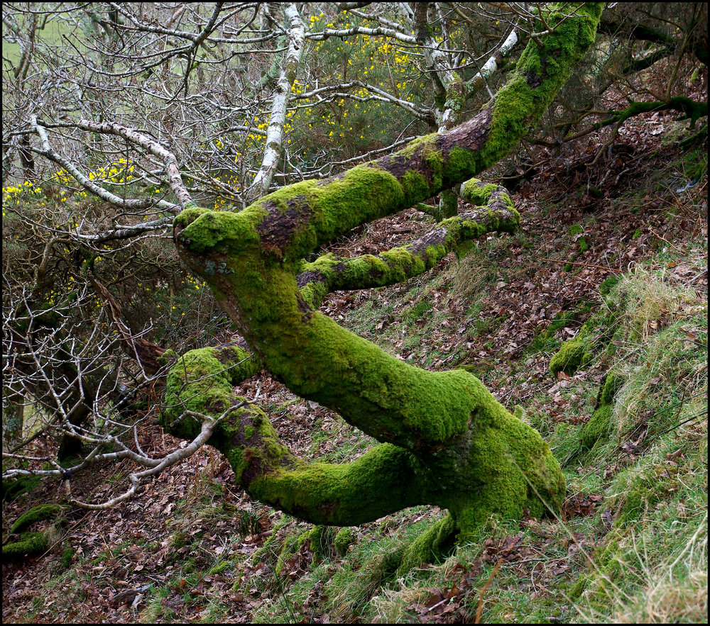 Twisted and Mossy