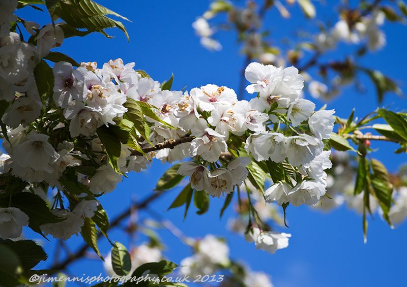 A bit of Blossom