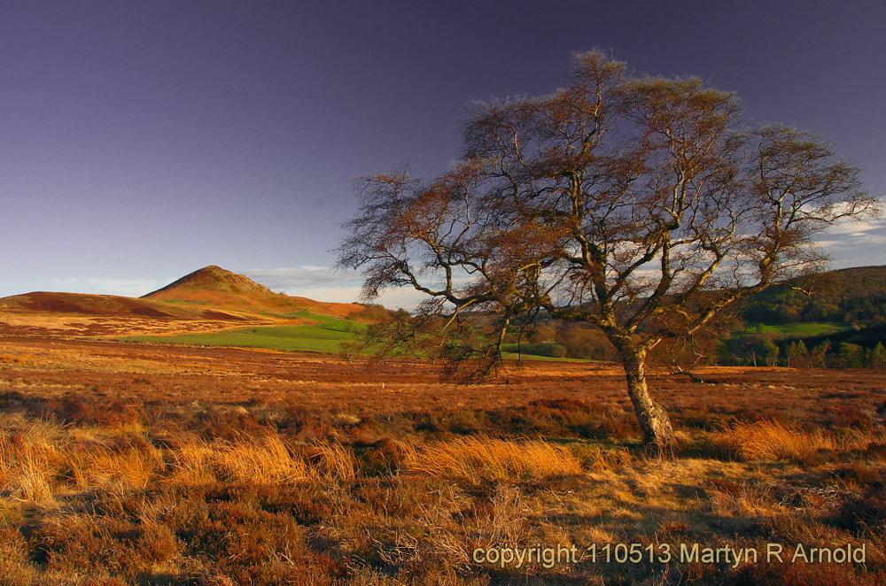 Evening light - North Yorks Moors