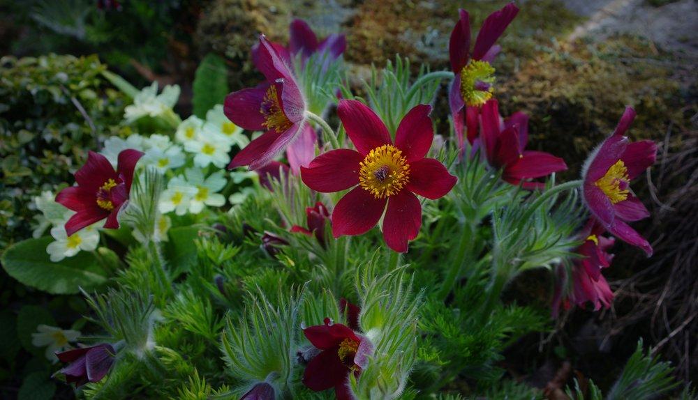 Sunlit flowers,