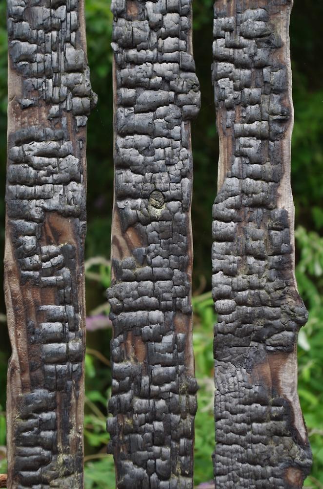 Burnt Fence