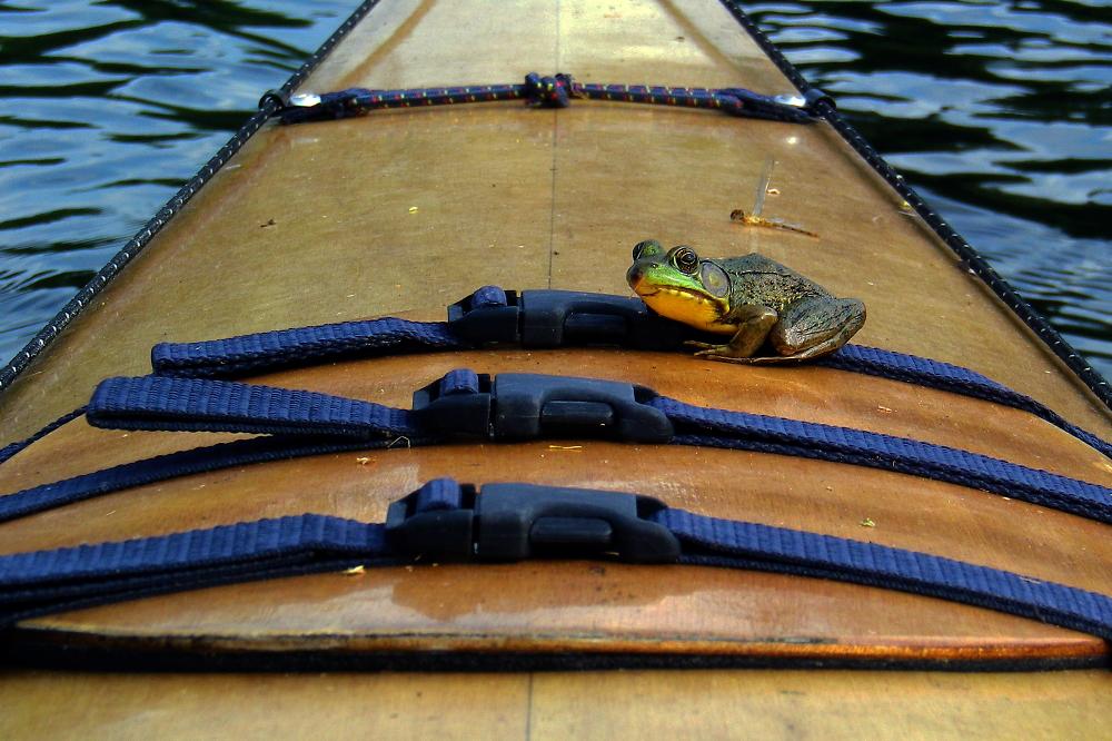 Kayak Hitch-Hiker