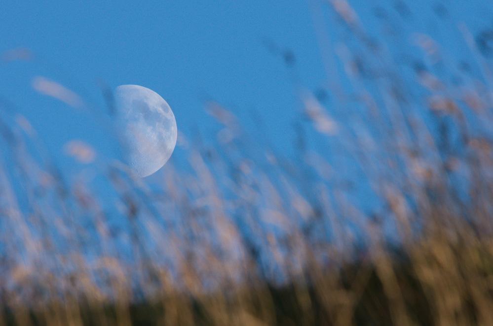 Moon & grass
