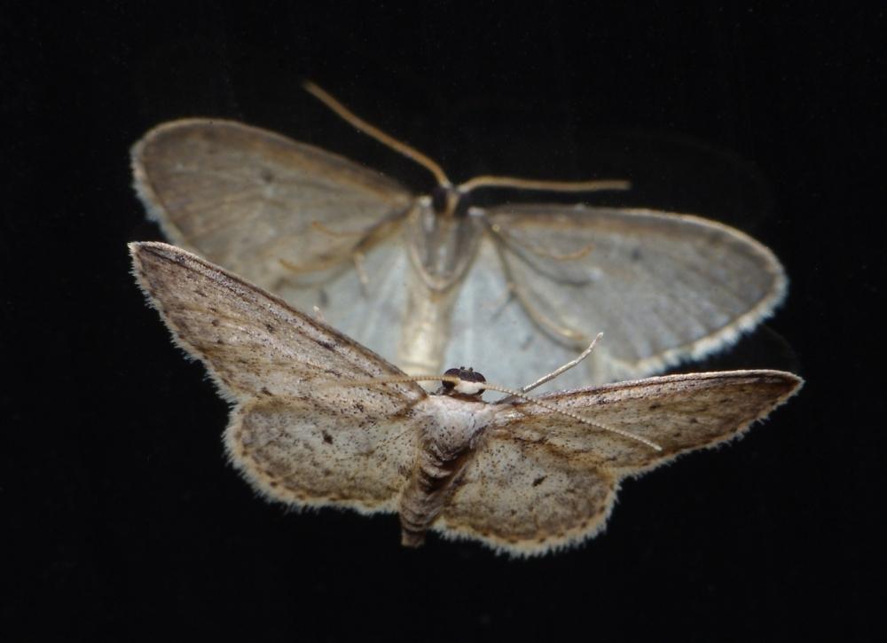 Mirrored moth