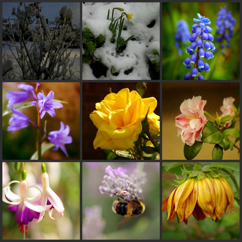 My garden,