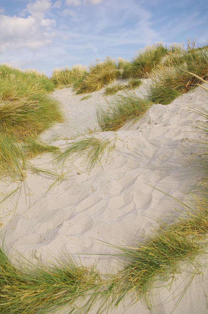 West Wittering Dunes 3