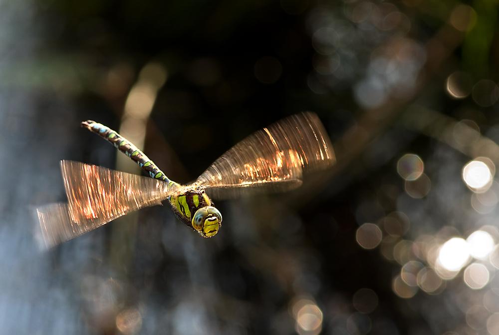 Hawker in Flight