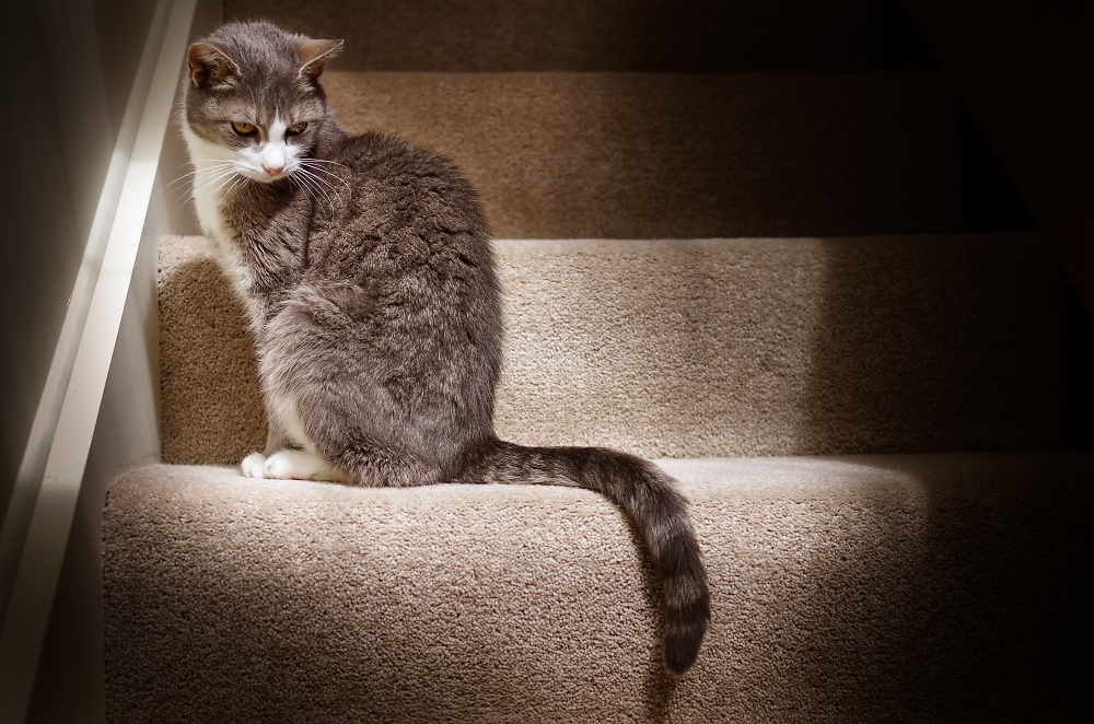Cat on the stairs in the light.