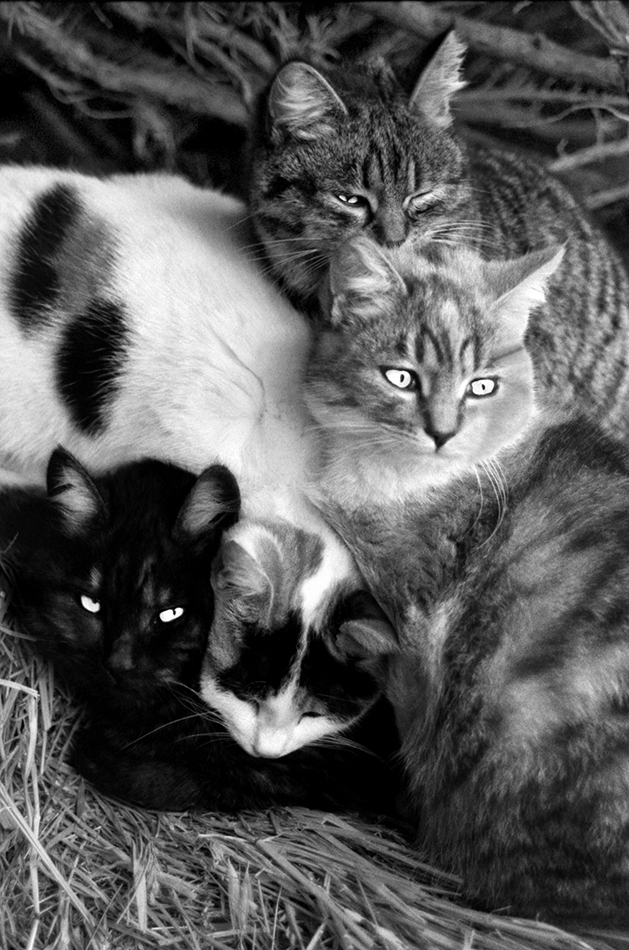 Nested Cats