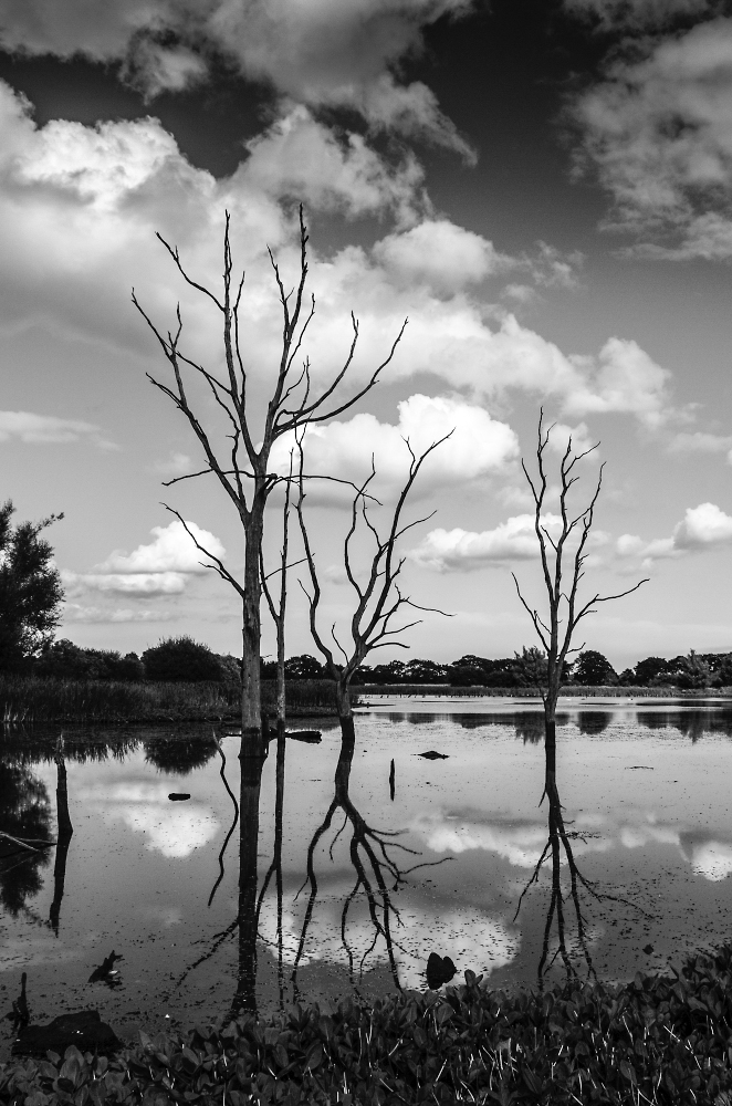 Reflections in mono.