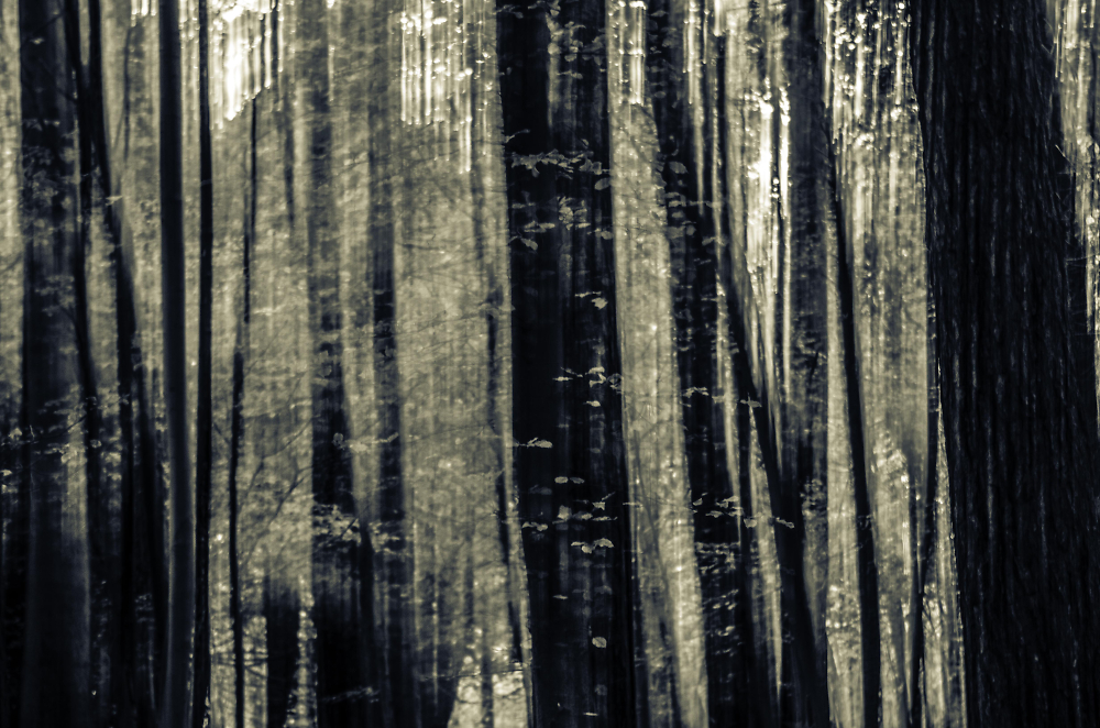 The Cold Wood