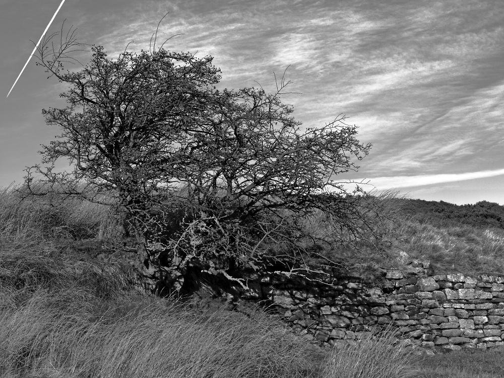 Tree on the moor