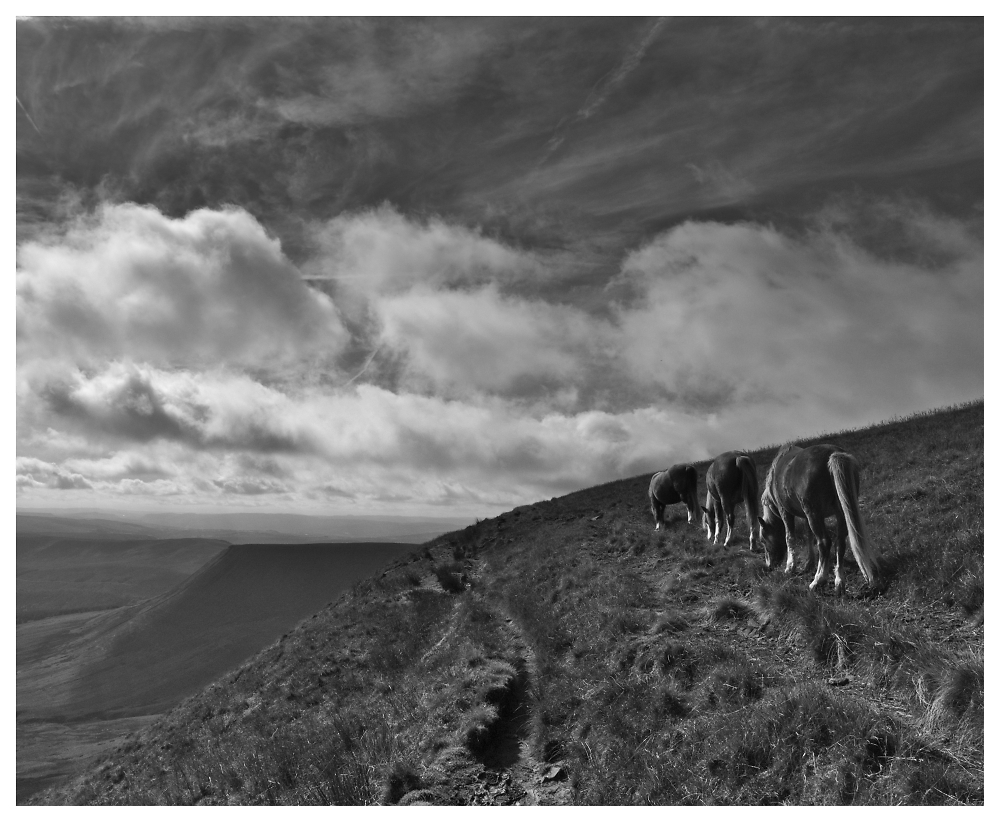 Three horses in the Black Mountains