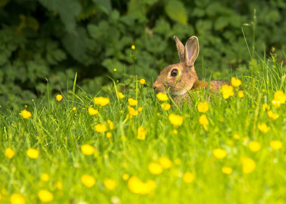 Bunny Butter