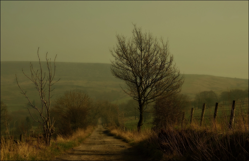 A lane in March
