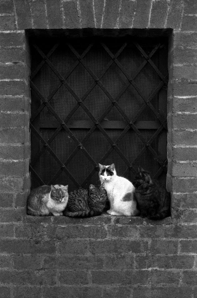 Cats' Parade