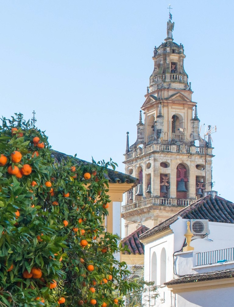 Cordoba Cathedral with January oranges