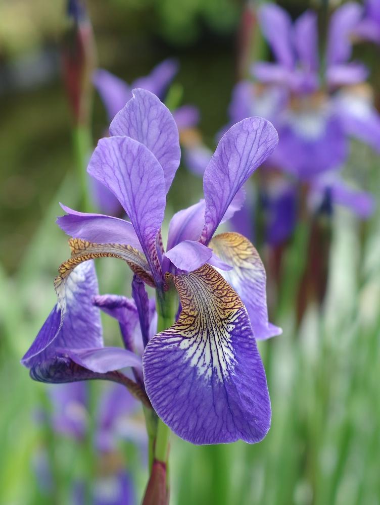 Iris mx 1 test