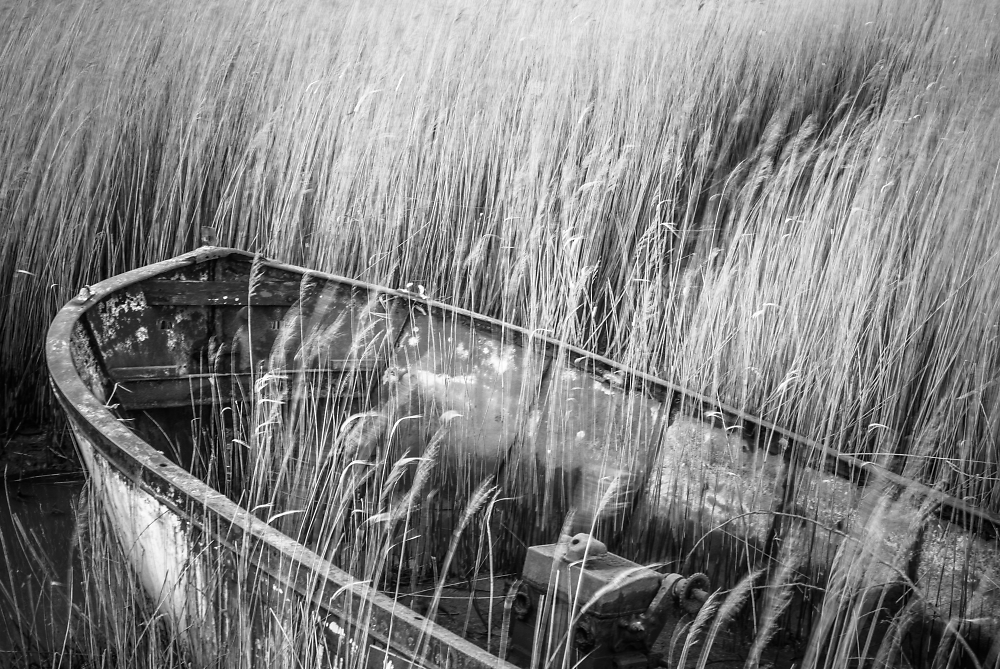 rusty boat and wind-blown reeds