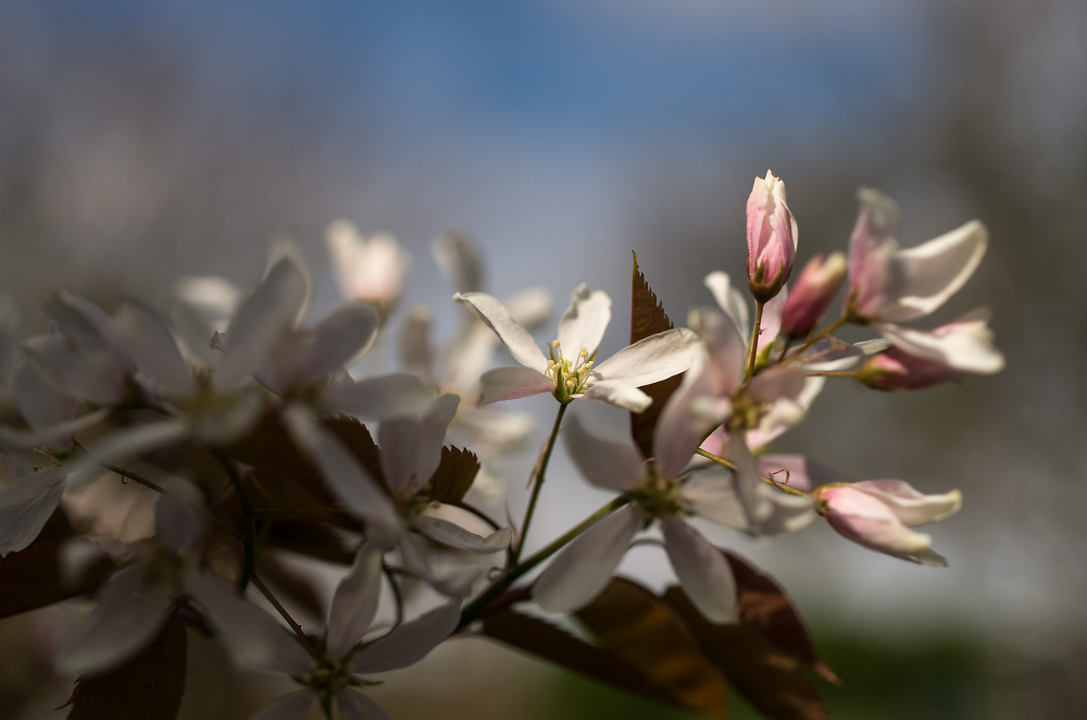 Blossom in the sunshine