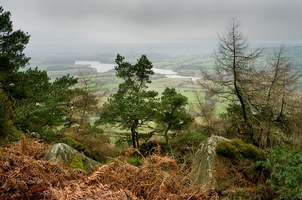 From The Roaches