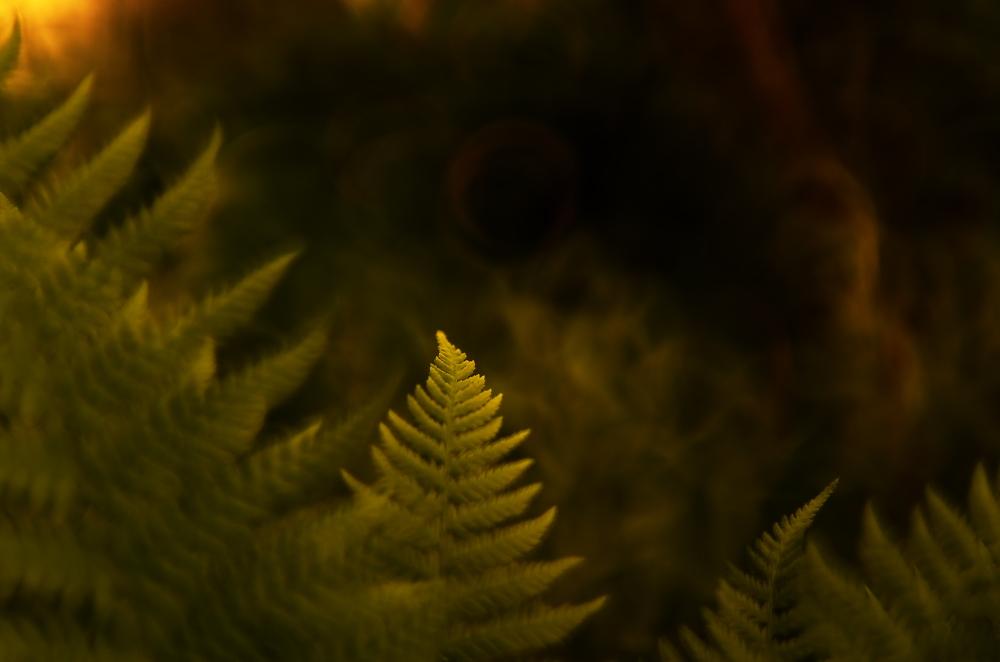 good morning ferns