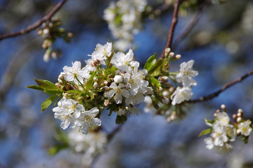 Spring in Berkshire