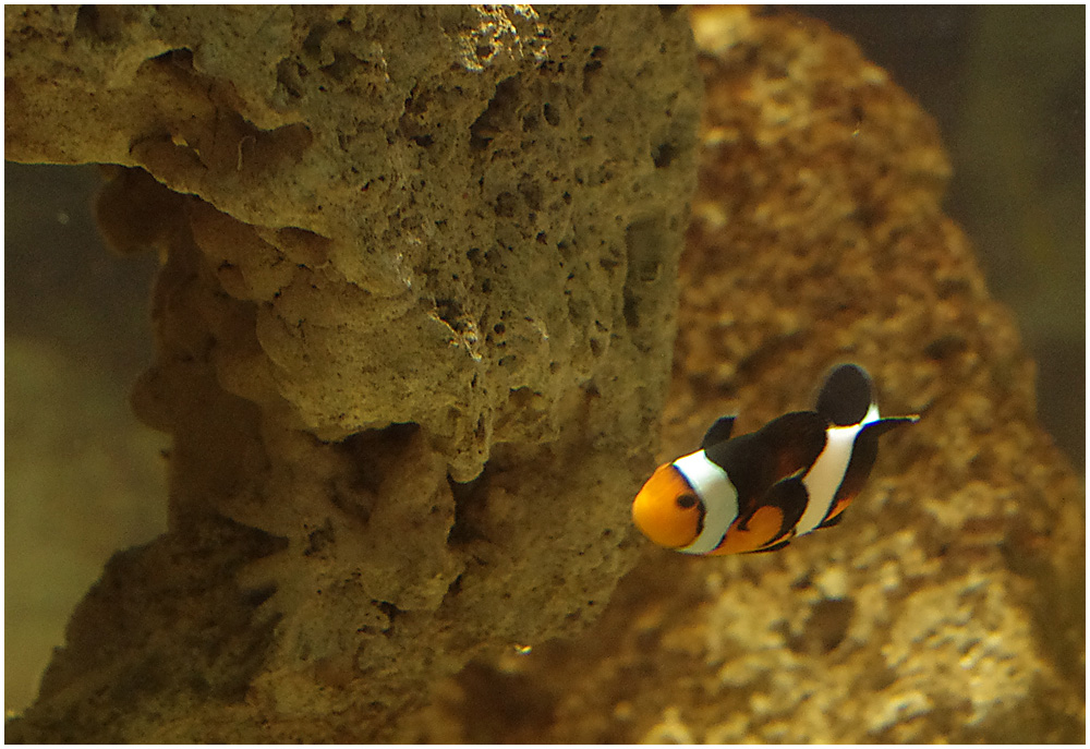 Nemo Spotted!