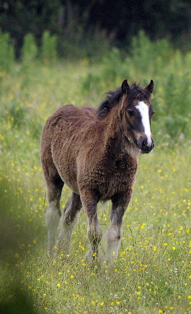 Day 24 Foal