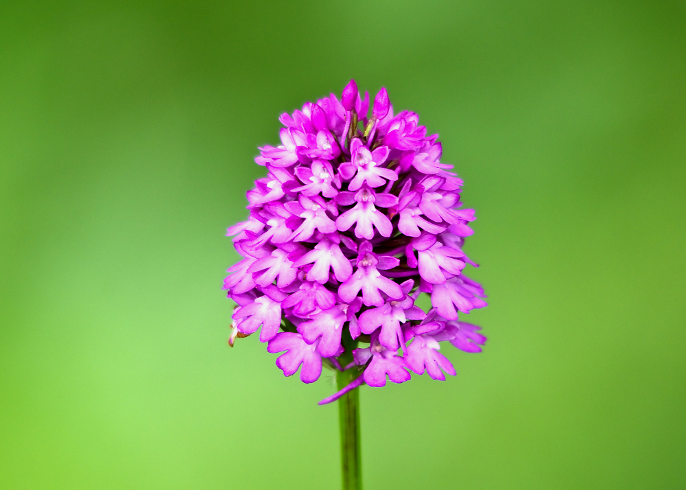 Just One Orchid