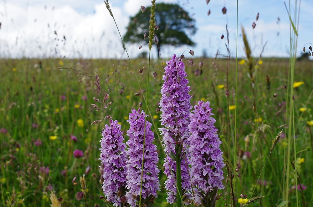 Orchid Meadow (Part two)
