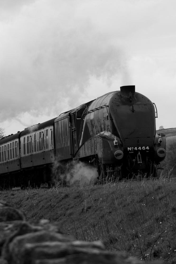 Bittern on the North York Moors Railway