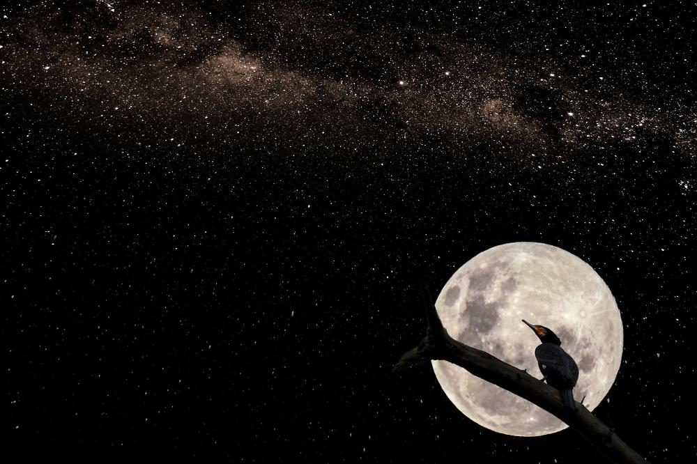 A Moonlit Shag