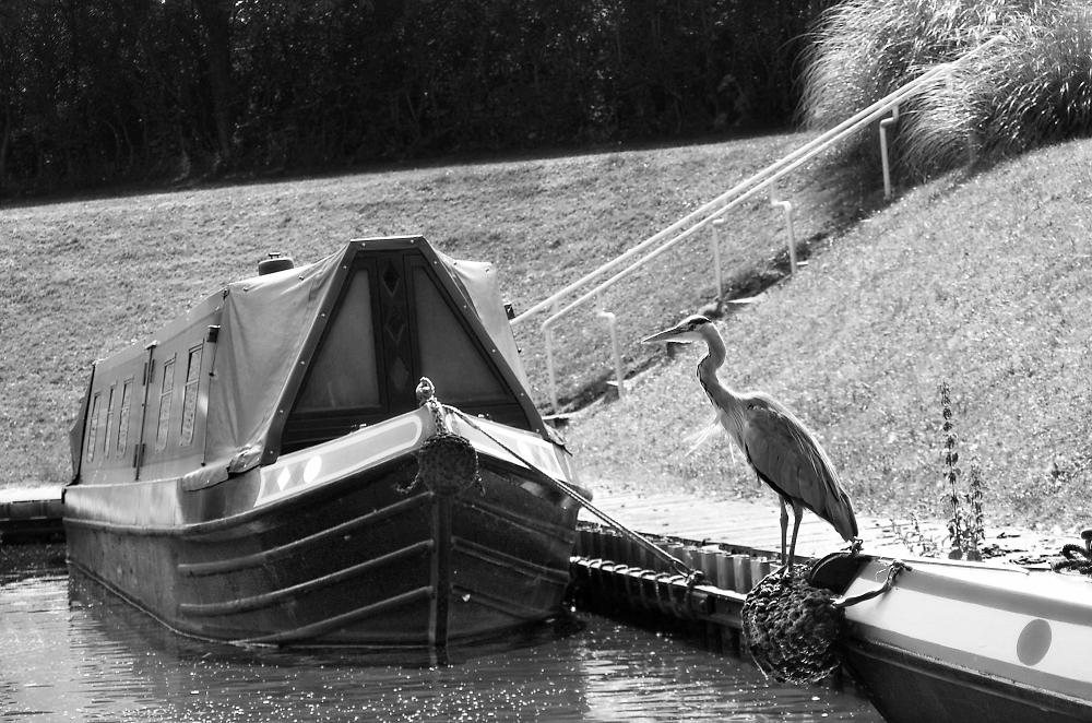 Barge and Heron